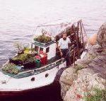 愛默與花船